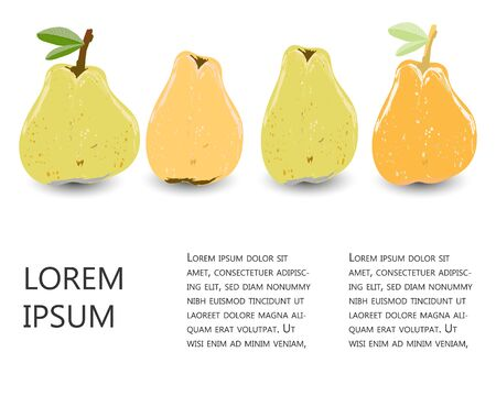 Yellow and orange pears set with copy space vector illustration. Set for design, banner, menu, poster.  イラスト・ベクター素材