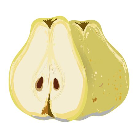 Pear whole and cut in half isolated on white background vector illustration. Summer fruit set for design, banner, menu, poster.  イラスト・ベクター素材