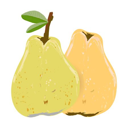 Yellow and orange whole pear isolated on white background vector illustration. Summer fruit set for design, banner, menu, poster.  イラスト・ベクター素材