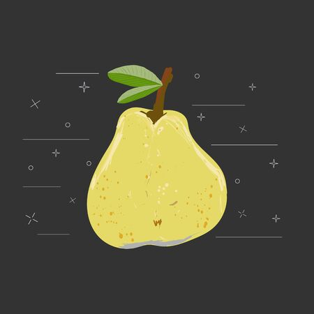 Yellow whole pear with leaves on a black background vector illustration. Summer fruit set for design, banner, menu, poster.