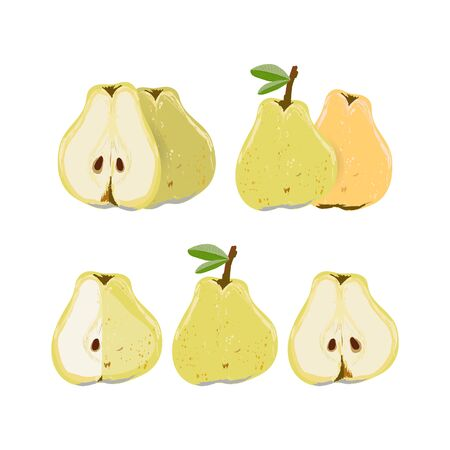 Set with whole and cut pear isolated on white background vector illustration. Summer fruit set for design, banner, menu, poster.