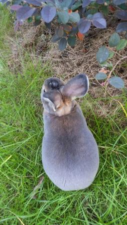 Rabbits in grass ,Cute Rabbit