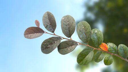 fresh leaves against the sky