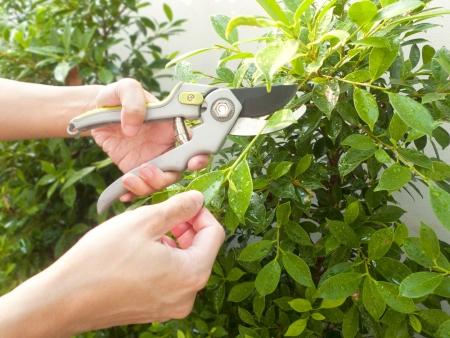 Las tijeras para cortar el árbol de jardines Foto de archivo - 17545321