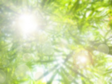 summer abstract nature background with bamboo.