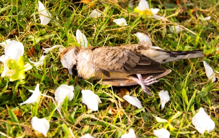 Dead brown bird on lawn. photo