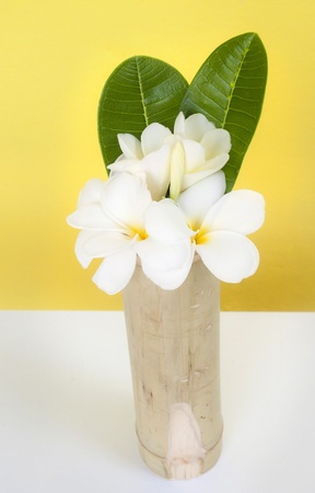 White Frangipani in a vase. photo