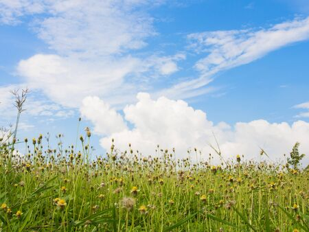 Meadow landscape with flowers Stock Photo