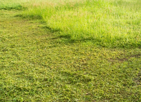 Track cut grass on the lawn, after passing mowers  photo