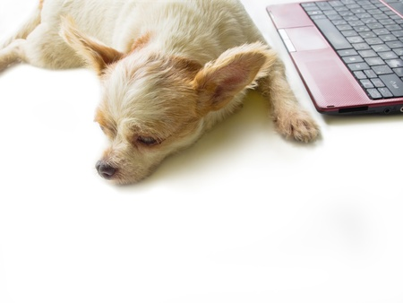 Dog and laptop, isolated on white background photo
