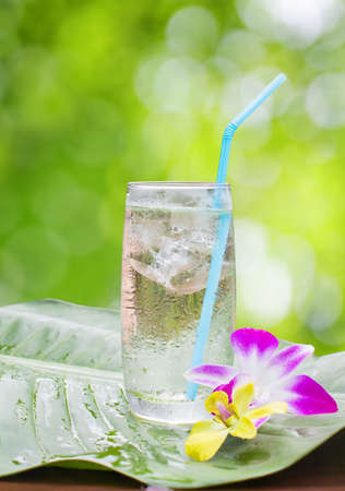 Glass of water on nature. Stock Photo