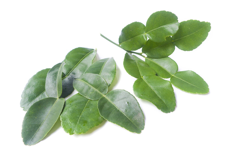 Kaffir lime leaves on White . Stock Photo