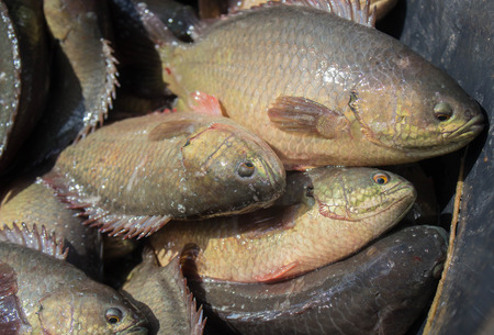 Fresh fishes in a market