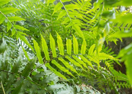 Summer background with fern leaf