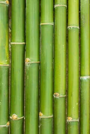 bamboo sticks in a row as background Stock Photo