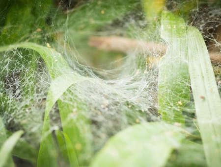 spiderweb: The spiderweb closeup background. Stock Photo