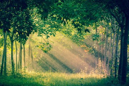 shining through: Sun rays shining through branches of trees. Stock Photo
