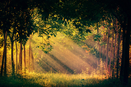 Sun rays shining through branches of trees. Stock Photo