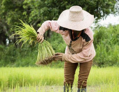 farm duties: farmer working on Field ,Thailand.