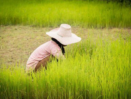 farmer working on Field ,Thailand.