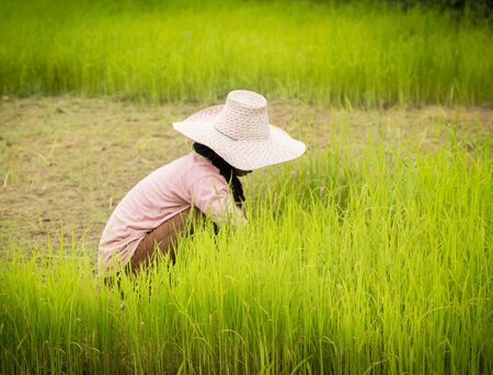 agriculturalist: farmer working on Field ,Thailand.