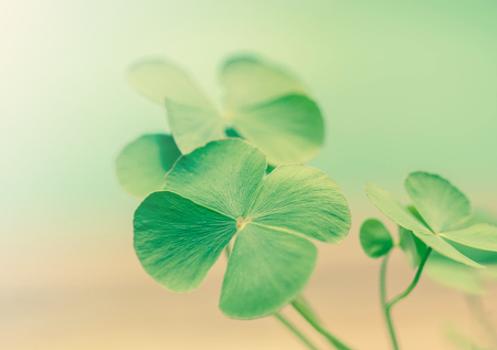 clovers: Green leaf clovers, Symbol of lucky.