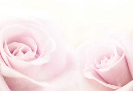 pink wedding: beautiful roses in soft color, made with blur style for background Stock Photo