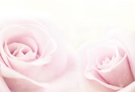 borde de flores: hermosas rosas en color suave, hecho con estilo desenfoque de fondo