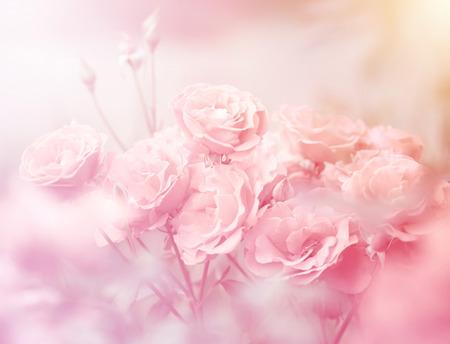 柔らかい色のピンクのバラ、作られてぼかし背景のスタイル