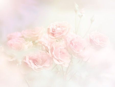 Pink roses in soft color, Made with blur style