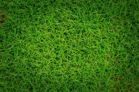 meadow  grass: Green meadow grass field