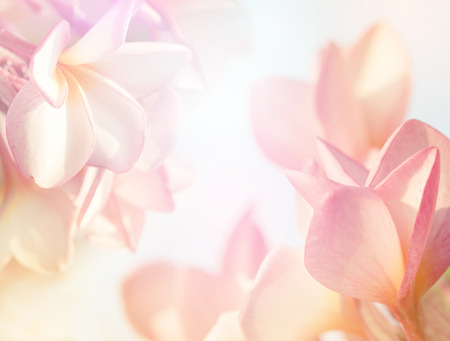 background card: Plumeria flower in blur style for background