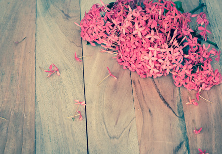 west indian: Red flowers on wooden background,West Indian Jasmine.