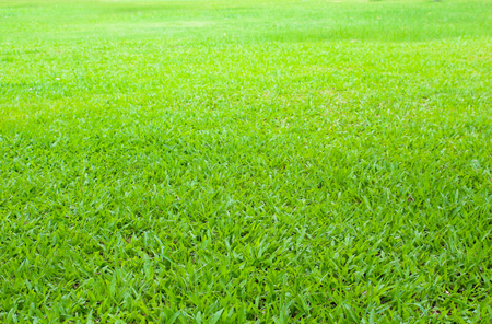 grassy plot: green grass field use as background,backdrop. Stock Photo