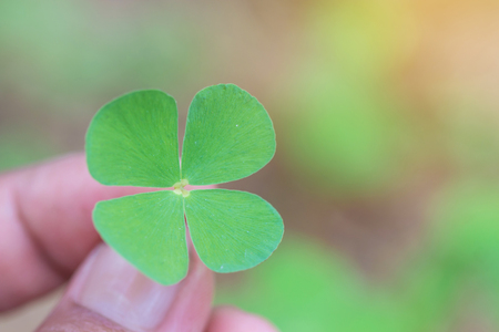 Clover leaf in hand,Lucky leaf clover.