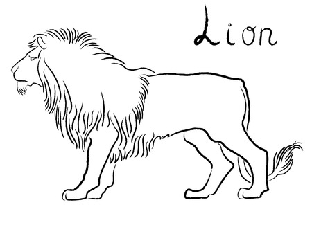 Black graceful Lion contour isolated over white  Hand drawing vector illustration Vector