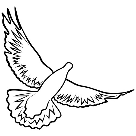 outstretched: Dove in flight with widely outstretched wings, outline vector illustration