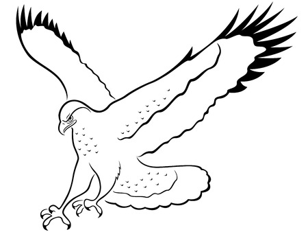 outstretched: Hawk with wide wings outstretched during the attack, cartoon vector outline