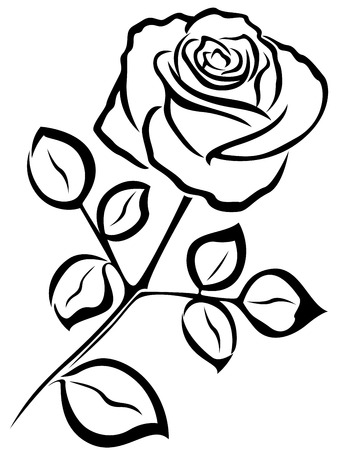Single Rose Stock Photos And Images 123rf
