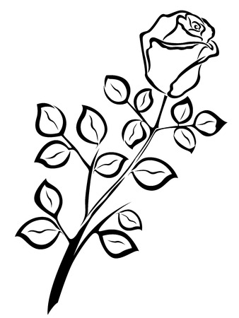 an inflorescence: Black outline of single rose flower isolated on a white background, vector illustration
