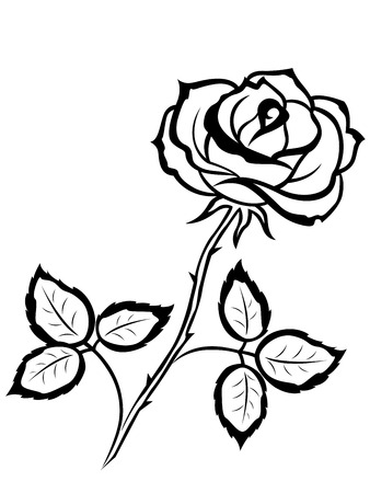 sepal: Beautiful black outline of single rose flower isolated on a white background, vector illustration