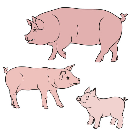 Gros cochon, truie et porcelet, illustrations de vecteur de dessin animé isolées sur le fond blanc Vecteurs