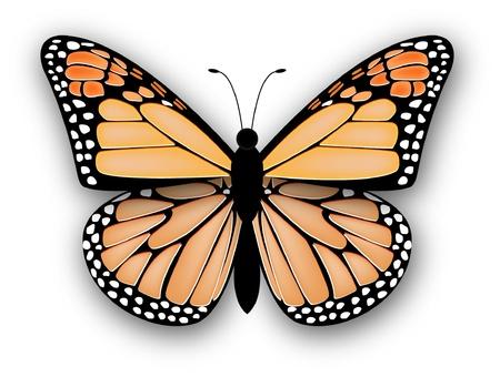 Papillon monarque isolé sur fond blanc Vecteurs