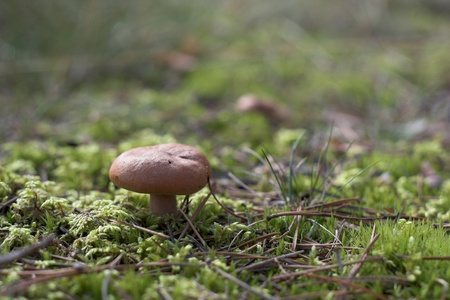 Close-up of Mushroom in the forest on a sunny summer day
