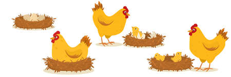 a set of illustrations on the topic of hatching eggs by a chicken.