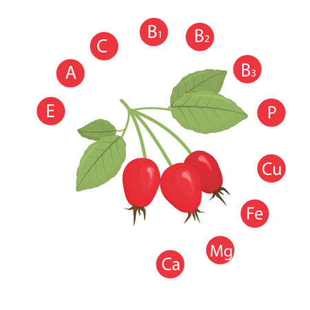 vector illustration of rosehip berries with the indicated vitamins and minerals contained in it. The concept of healthy nutrition and a healthy lifestyle