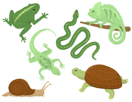 set of vector illustrations with reptiles living in the tropics, isolated on a white background