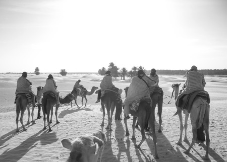 People move on camels in the desert at sunset. Black and white