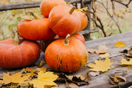 Happy Halloween, Thanksgiving. Pumpkin fruit with maple leaves on a wooden table, collecting the autumn harvest. Concept of tradition. Standard-Bild