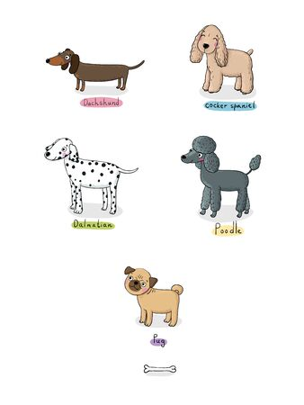dog outline: Hand drawn vector illustration.Sketch animals. Doodle Dog. Cocker Spaniel and Dachshund. Dalmatians and poodle. Shar Pei and Pug. Illustration
